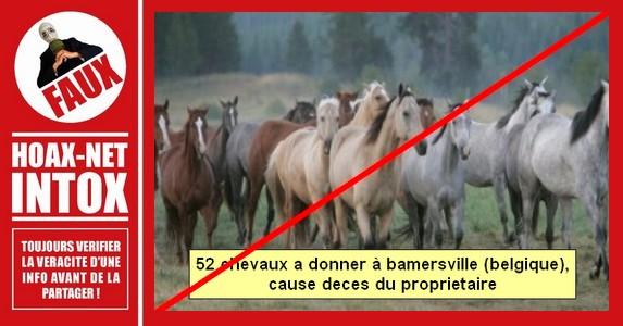 Non, il n'y a pas 52  chevaux a donner à  BAMERSVILLE en Belgique