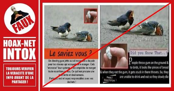 Non, cet oiseau n'est pas mort après avoir avalé un chewing-gum