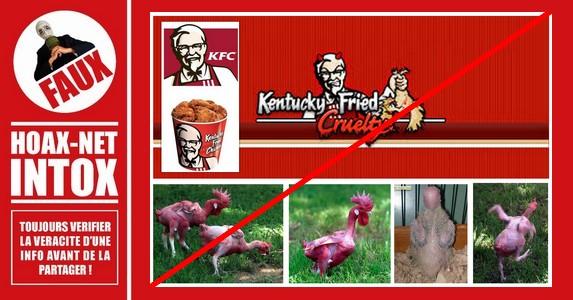 Non KFC ne fait pas l'élevage de poulets mutants.
