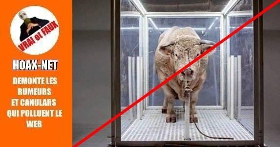 Un taureau vivant torturé à l'Opéra de Paris ? Pas si simple…