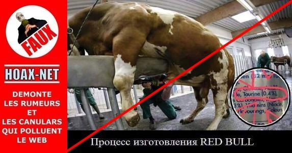 NON, il n'y a pas de sperme de taureau dans le Red Bull