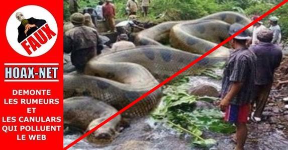 NON, on a pas trouvé un anaconda de 134 mètres et pesant 2967 kg