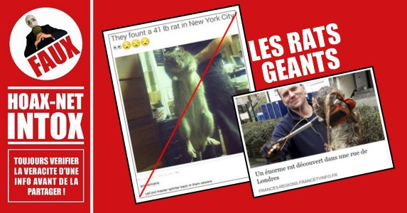 NON, un rat de 19 kg a New-york et un rat de 1m20 a Londres n'ont pas été retrouvé !