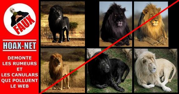 La légende du Lion Noir