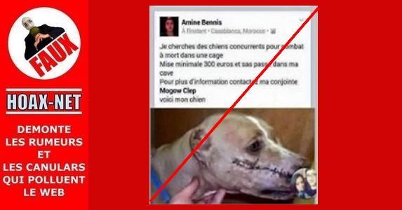 Fausse accusation de recrutement de chien de combat ou L'histoire de Gypsy !!