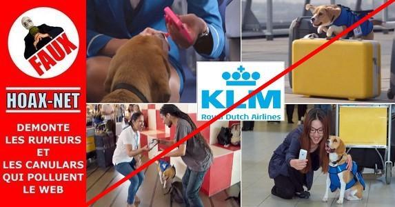 2015-Sherlock, le chien des objets trouvés, n'était qu'un coup publicitaire