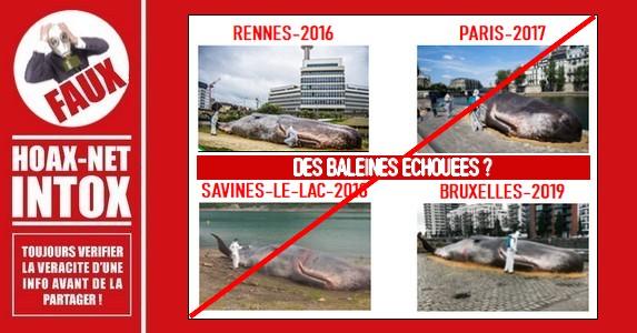 NON, une baleine ne s'est pas échouée ni à Rennes, ni à Paris, ni à Savines-le-lac, ni à Bruxelles..