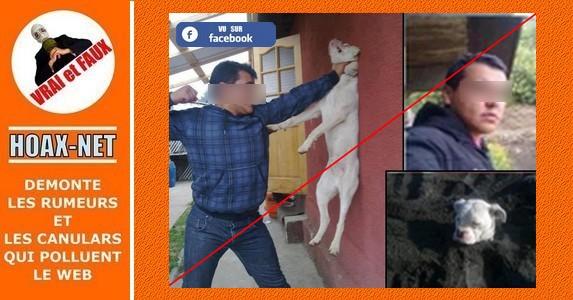 Avis de recherche pour maltraitance sur un chien, périmé depuis 2012.