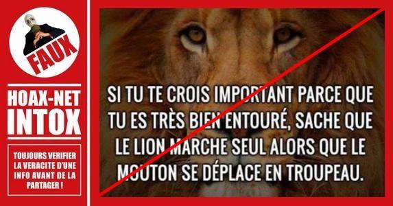 Le lion ne marche pas seul, il vit en groupe !