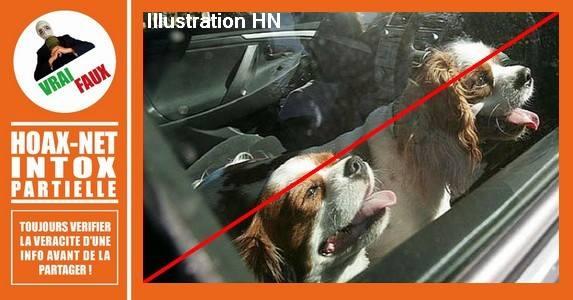Non, la police n'autorise pas à casser la vitre d'une voiture pour sauver un animal, mais …