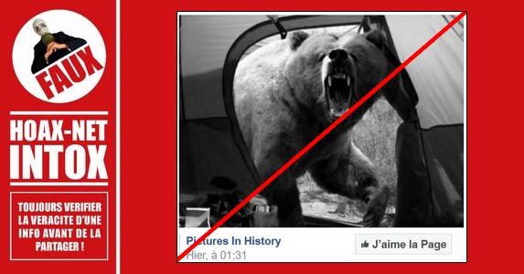 Non, ce n'est pas la dernière photo qu'un photographe a prise avant d'être tué par un ours.