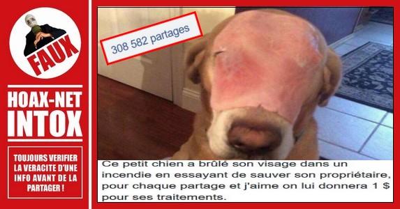 LE FAKE DE L'ANNÉE : Non, ce chien n'a pas été brulé lors d'un incendie