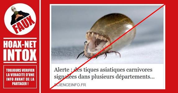 Non, des tiques asiatiques carnivores n'ont pas été signalées en France