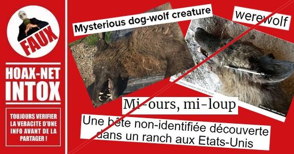 Non, ce n'est pas un loup garou qui a été abattu aux Etats-Unis.