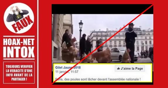 Non, les «gilets jaunes» n'ont pas lâché des poules devant l'Assemblée Nationale.