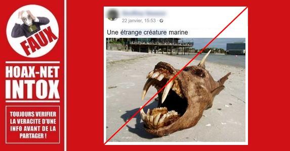 Non, cette étrange créature n'a pas été retrouvée sur une plage