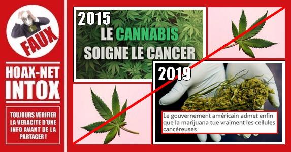 Non, la marijuana ne tue pas les cellules cancéreuses.