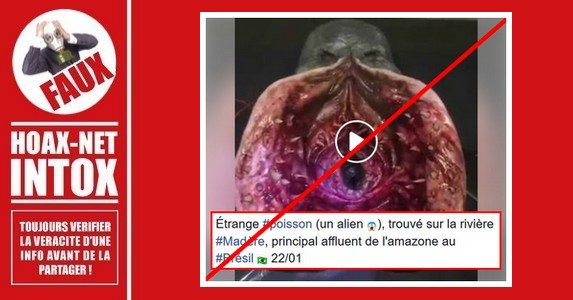 Non, il ne s'agit pas d'un Alien trouvé dans la rivière Madeira au Brésil.
