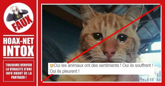 Non, ce chat ne pleure pas de tristesse.