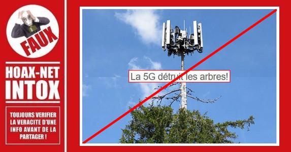 Non, la 5G ne détruit pas les arbres.