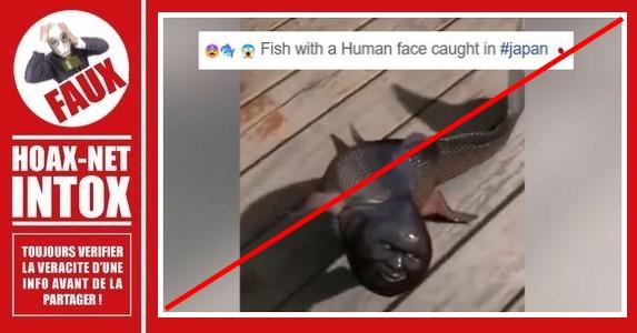 Non, ce poisson avec un visage humain n'existe pas