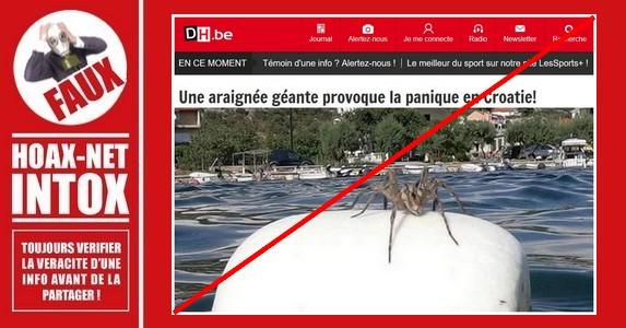 Non, ce n'est pas une araignée géante présentée sur la photo.