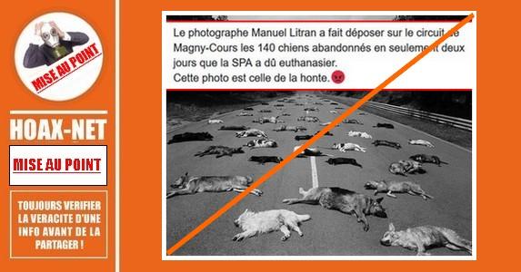 Mise au point sur cette photo montrant 140 chiens abandonnés et euthanasiés par la SPA.