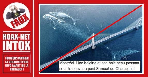 Non, ce n'est pas une baleine et son baleineau sous le pont Samuel-De Champlain à Montréal