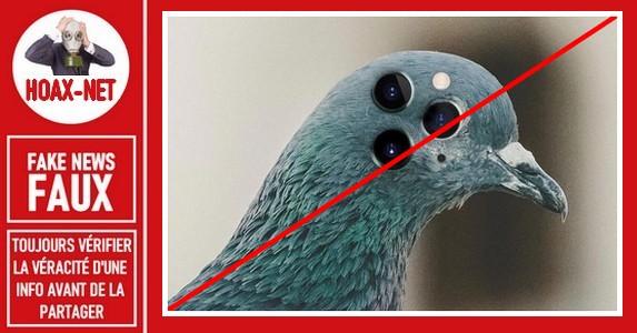 Non, ce pigeon n'est pas une caméra volante