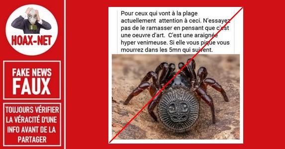 Non, l'araignée «Cyclocosmia» n'est pas un danger mortel.
