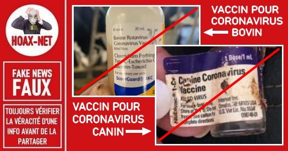 Non, ce vaccin pour les animaux n'est pas efficace contre le coronavirus SARS-CoV-2