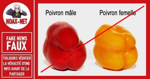 Non, il n'y a pas de poivron mâle ou femelle.