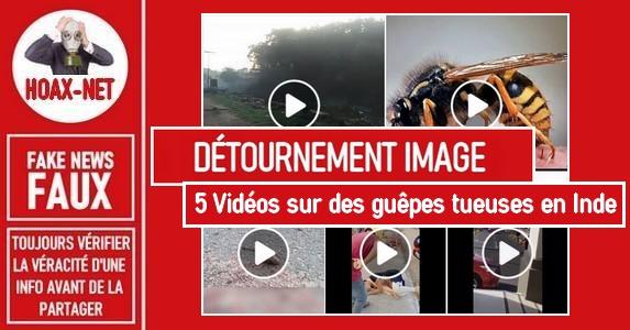 Non, ces vidéos ne montrent pas des attaques de guêpes en Inde.