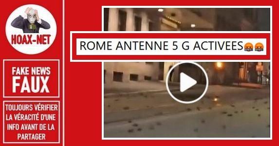 Non, à Rome comme à Barcelone, ces oiseaux ne sont pas morts a cause de la 5G.