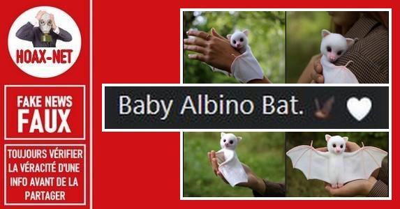 Non, il ne s'agit pas d'un vrai bébé chauve-souris albinos.