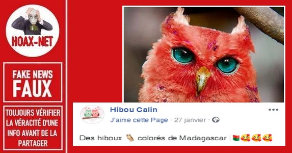 Non, il n'y a pas de «hibou ou de «chouette» rouge aux yeux bleus à Madagascar ni ailleurs.